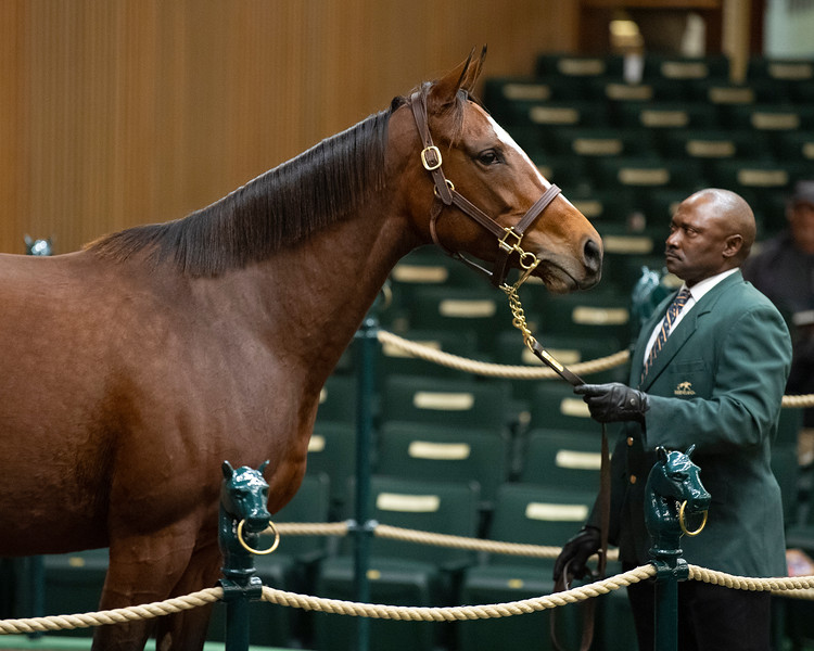 Hip 256 Hourglass <br /> at  Nov. 6, 2019 Keeneland in Lexington, KY.