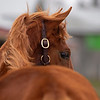 Yearling with windblown mane. Scenes during the Keeneland January sales on Jan. 11, 2020 Keeneland in Lexington, KY.