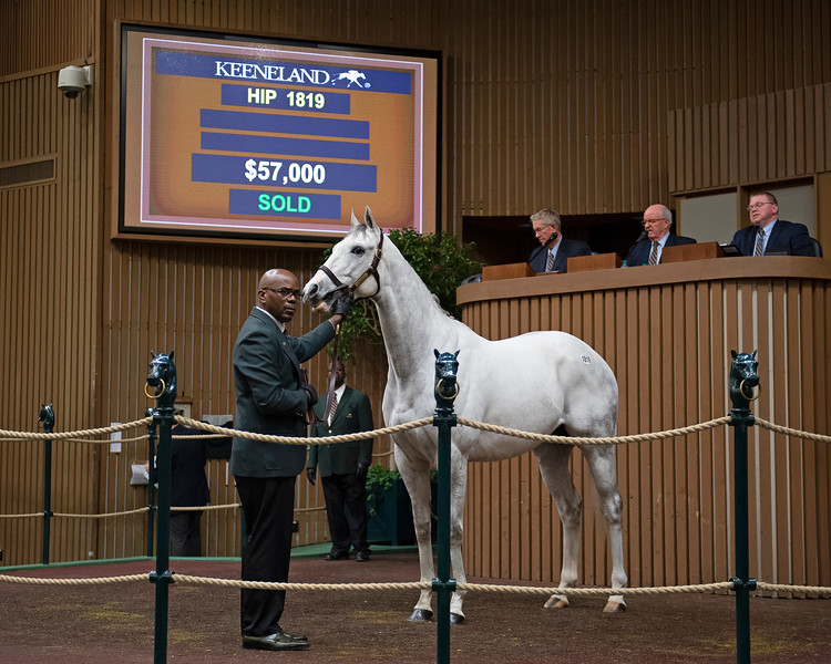 Hip 1819 Labeq<br /> Keeneland January Horses of all ages sales on<br /> Jan. 17, 2020 Keeneland in Lexington, KY.
