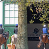 Caption: returning to barn after to training<br /> Training at Silver Springs Training, part of Silver Springs Stud, near Lexington, Ky.,  on April 8, 2020 Silver Springs in Lexington, KY.