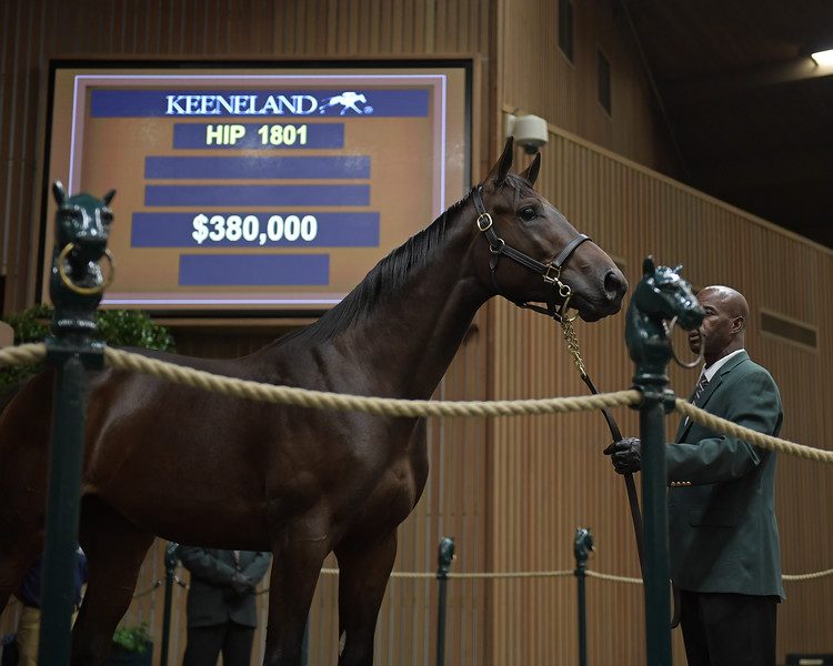 Hip 1801 colt by Uncle Mo from Secret Someone<br /> at Keeneland.
