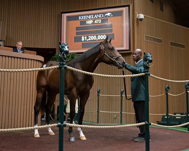 The Medaglia d'Oro colt consigned as Hip 472 in the ring at the Keeneland September Sale