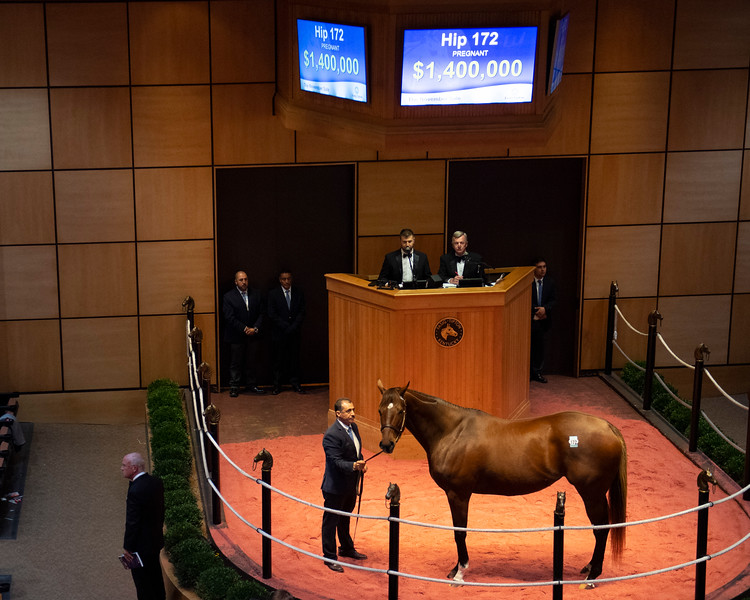 Hip 172 Road to Victory at Bluewater<br /> at  Nov. 5, 2019 Fasig-Tipton in Lexington, KY.