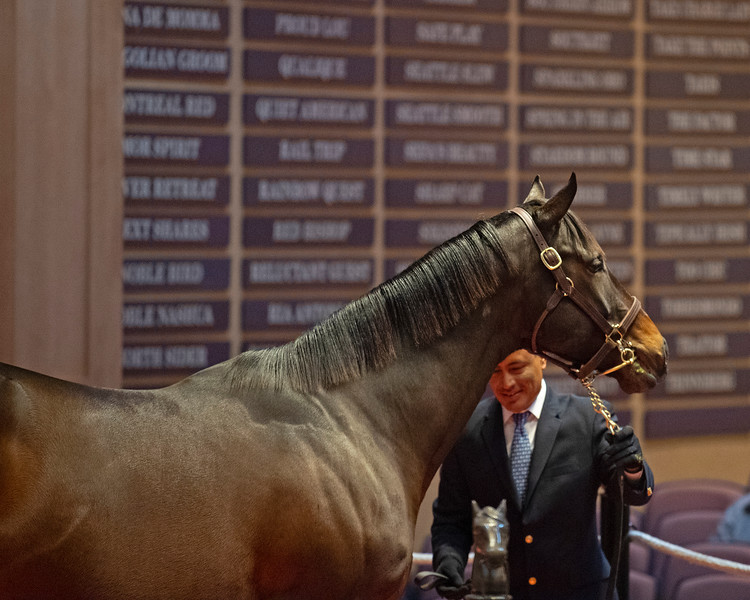Hip 141 Laffina from Taylor Made<br /> at  Nov. 5, 2019 Fasig-Tipton in Lexington, KY.