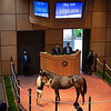 Hip 560 filly by Medaglia d'Oro out of Darling's Darling from Gainesway<br /> Fasig-Tipton Selected Yearlings Showcase in Lexington, KY on September 10, 2020.