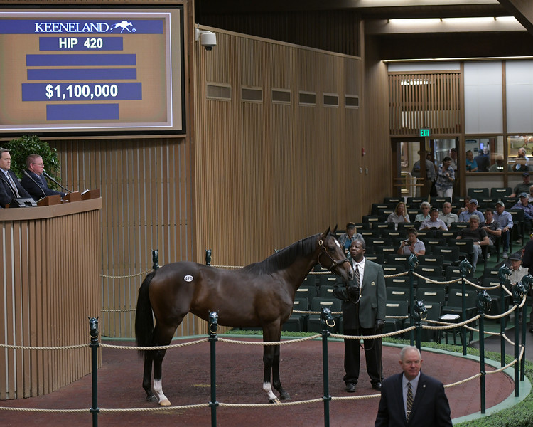 The Medaglia d'Oro filly consigned as Hip 420 at the Keeneland September Sale
