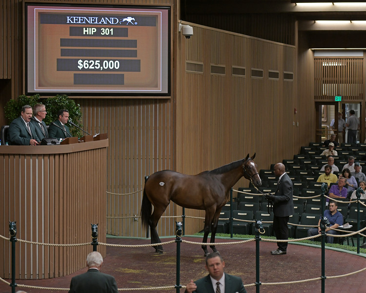 The Pioneerof the Nile filly consigned as Hip 301 at Denali Stud's consignment to the Keeneland September Sale