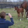 Jamie McDiarmid taking photo. The first foal, a filly by Justify from the mare Foreign Affair, was born on Jan. 3, 2020, at Amaroo Farm for owners Audley Farm on Jan. 11, 2020 Amaroo Farm in Lexington, KY.