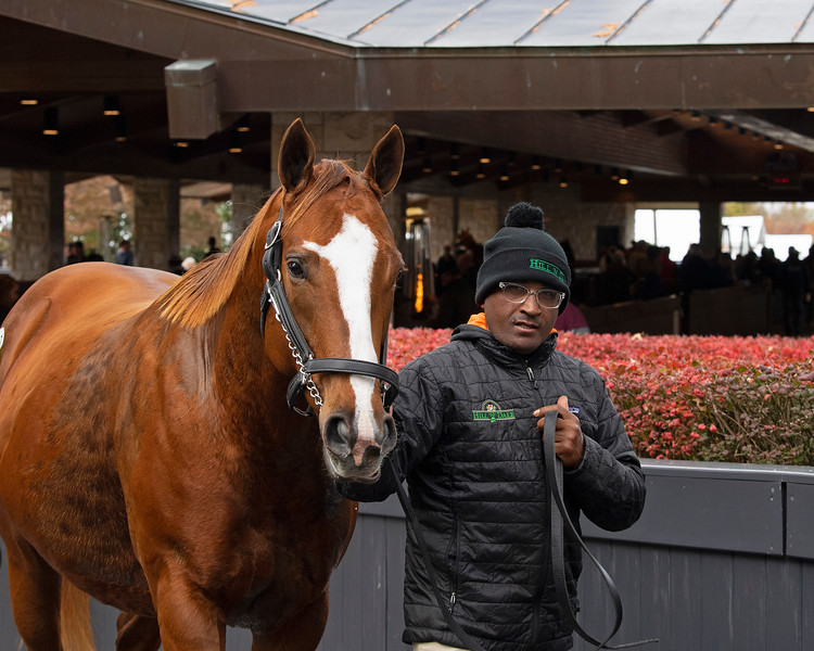 Hip 111 Take Charge Brandi<br /> at  Nov. 6, 2019 Keeneland in Lexington, KY.