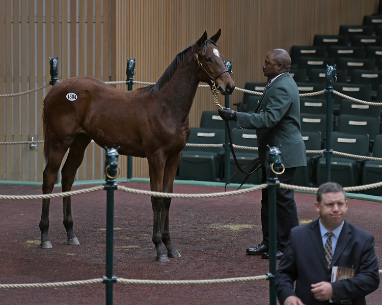 Hip 1594 filly by Street Sense from One Look<br /> on  Nov. 16, 2019 Keeneland in Lexington, KY.