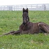Caption: foal from mare Switched Up<br /> Rob Tillyer and Dixiana Farm scenes near Lexington, Ky.,  on April 18, 2020 Dixiana in Lexington, KY.