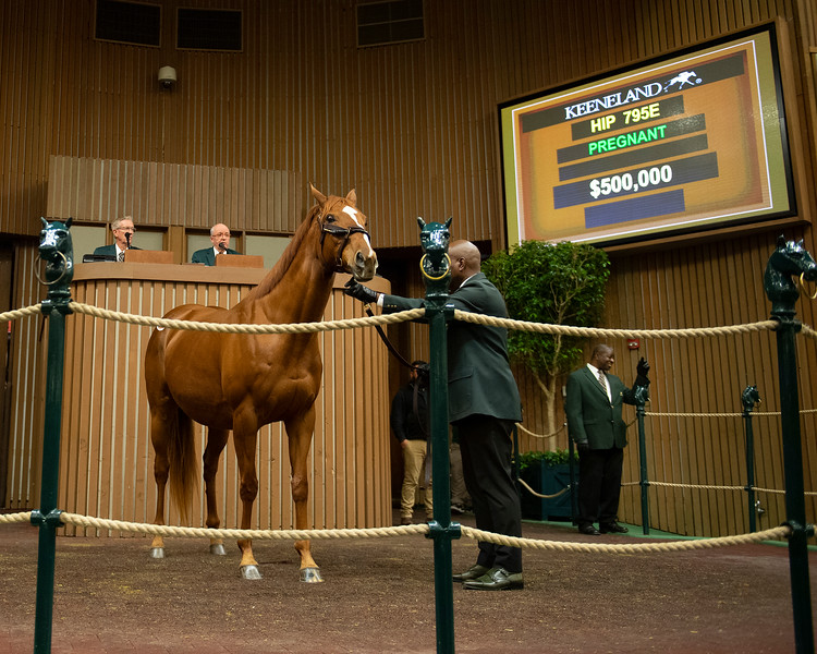 Hip 795E Inflamed from Glen Hill, on way to final price of $525,000<br /> Keeneland January Horses of all ages sales on<br /> Jan. 14, 2020 Keeneland in Lexington, KY.