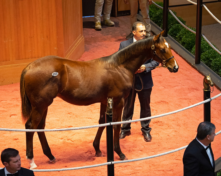 Hip 50 colt by Ghostzapper from Orphea at Scott Mallory<br /> at  Nov. 5, 2019 Fasig-Tipton in Lexington, KY.