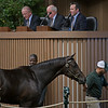 Hip 4414<br /> at the Keeneland September sale