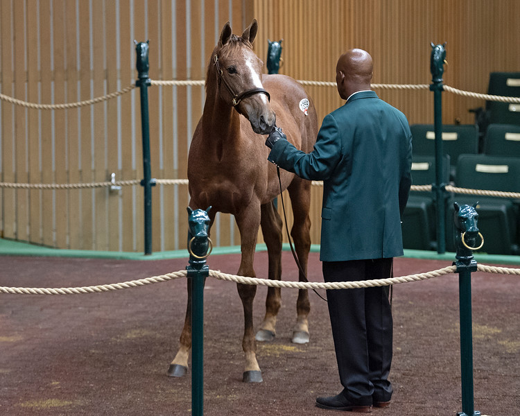 Hip 1359 colt by Liam's Map from Bitterroot<br /> on  Nov. 9, 2019 Keeneland in Lexington, KY.