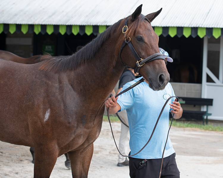 The Runhappy colt consigned as Hip 716 in Select Sales consignment at the Keeneland September Sale