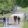 Scene with Lane's End yearling<br /> at the Keeneland September Sale.