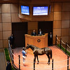 Hip 618 colt by Giant's Causeway out of Game for More and Wynnstay Sales<br /> Fasig-Tipton Selected Yearlings Showcase in Lexington, KY on September 10, 2020.