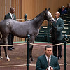 Hip 686 filly by Frosted from High Style and Grovendale<br /> Keeneland January Horses of all ages sales on<br /> Jan. 14, 2020 Keeneland in Lexington, KY.
