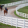 scene with horses going to the racetrack.<br /> Morning sales and racing scenes at Keeneland in Lexington, Ky., on April 4, 2019