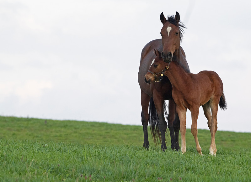 Caption:  Miss Chapin and her colt by Oscar Performance. Note the mare will not wear a halter per Mill Ridge<br /> Mill Ridge Farm scenes, near Lexington, Ky.,  on April 15, 2020 Mill Ridge in Lexington, KY.