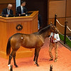 Hip 335 filly by Arrogate out of Sacristy from Taylor Made Sales<br /> Fasig-Tipton Selected Yearlings Showcase in Lexington, KY on September 10, 2020.