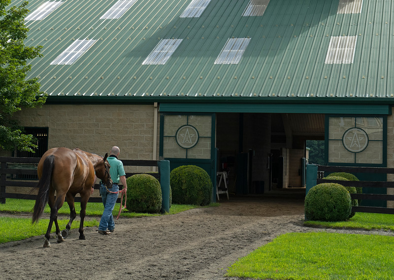 Caption:  Heath walks Fred back to the main training barn. <br /> A native of Oklahoma, Heath started working at WinStar Farm on October 10, 2014, and became the farm trainer in October of 2018. Presently he has about 100 horses in training at the WinStar Farm training center, where they have a 7 1/2-furlong main track and 3/4 of a mile undulating turf gallop.<br /> Daily Life series on Destin Heath, farm trainer at WinStar Farm on Aug. 11, 2020 WinStar Farm in Versailles, KY.
