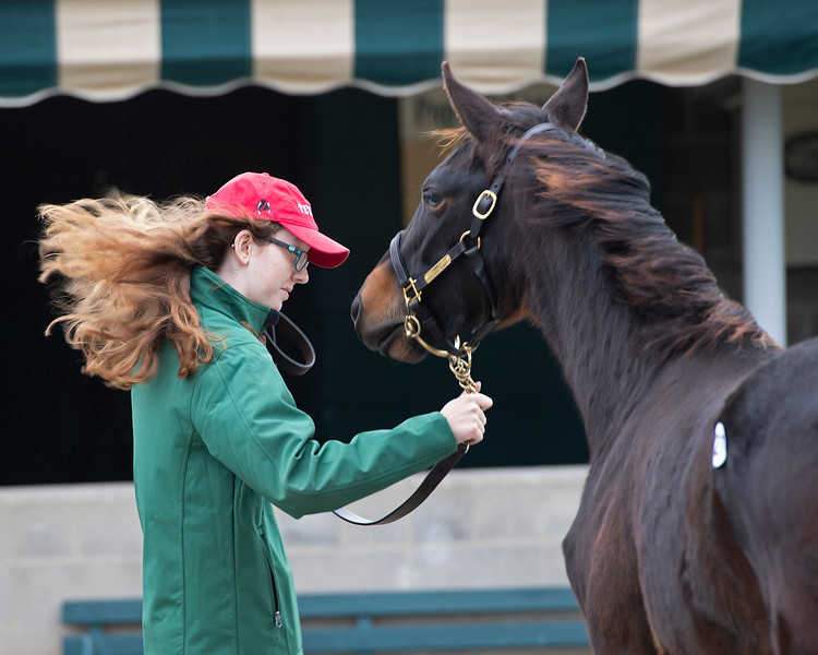 Blustery first day of showing with hair flying and handler Jordan Sigmon and Connect filly Hip 227 at Pope McLeans, Crestwood Farm. Scenes during the Keeneland January sales on Jan. 11, 2020 Keeneland in Lexington, KY.