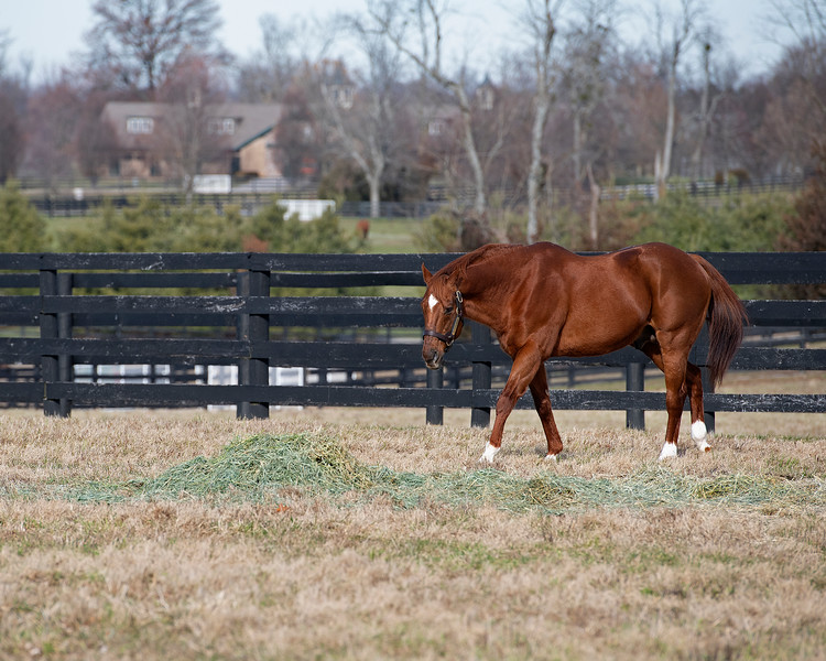 Distorted Humor at WinStar Farm on Dec. 23, 2019 WinStar Farm in Versailles, KY. Photo: Anne M. Eberhardt