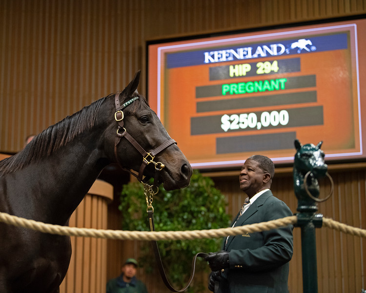 Hip 294 Liquorice Marilyn at Lane's End<br /> at  Nov. 7, 2019 Keeneland in Lexington, KY.