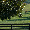 Caption: Sassy Rose<br /> Chuck and Lyra Miller at Rosecrest Farm near Paris, Ky. on July 10, 2020 Rosecrest in Paris, KY.