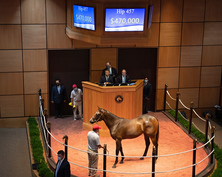 Hip 457 colt by Pioneerof the Nile out of Wynning Ride, Eaton Sales<br /> Fasig-Tipton Selected Yearlings Showcase in Lexington, KY on September 10, 2020.