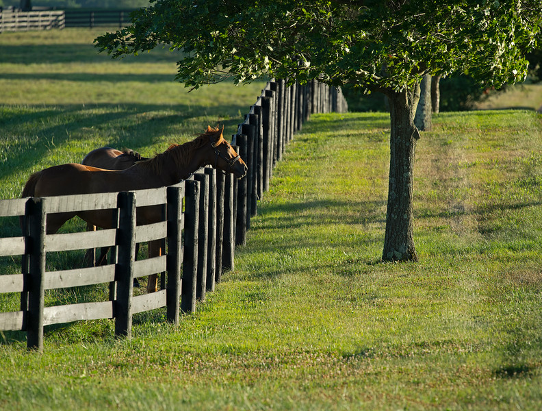 Caption: mares in field<br /> Chuck and Lyra Miller at Rosecrest Farm near Paris, Ky. on July 10, 2020 Rosecrest in Paris, KY.