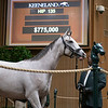 The Tapit colt consigned as hip 135 at the Keeneland September Sale.