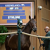 The Dubawi colt consigned as Hip 375 at Lane's End's consignment to the Keeneland September Sale