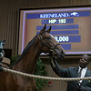 The Medaglia d'Oro colt consigned as Hip 192 in the ring at the Keeneland September Sale