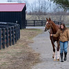 Going to paddock after aqua equine treadmill session. Code of Honor at Margaux Farm for some down time before returning to Shug McGaughey and his 4-year-old campaign on<br /> Jan. 23, 2020 Margaux Farm in Midway, KY.