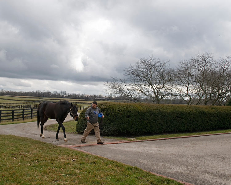 Caption: About 1:30 pm, Twirling Candy comes in for afternoon breeding. Daily Life on Billy Sellers, Lane's End Farm stallion manager who started working for the farm in 1982 and who has been their only stallion manager since 1985 when the farm acquired their first stallions, photographed on<br /> March 3, 2020 Lane's End Farm in Versailles, KY.
