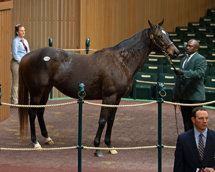 HIp 274G Purely Hot<br /> at  Nov. 6, 2019 Keeneland in Lexington, KY.