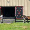 Caption: Aidan O'Meara watches yearlings during sales prep, handwalking, including filly by Gun Runner from High Authority. Aidan and Leah O'Meara at Stonehaven Steadings near Versailles, Ky. on Aug. 7, 2020