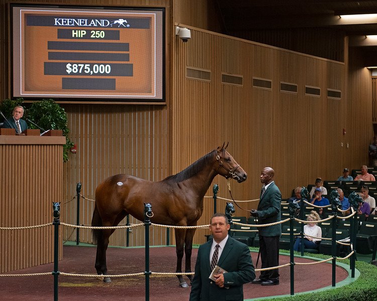 The Flatter colt consigned as Hip 250 at Elm Tree Farm's consignment to the Keeneland September Sale