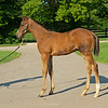 Caption: <br /> Diva Delite's 2020 colt by Justify born on May 11, at Hunter Valley Farm on July 8, 2020 Hunter Valley Farm in Versailles, KY.