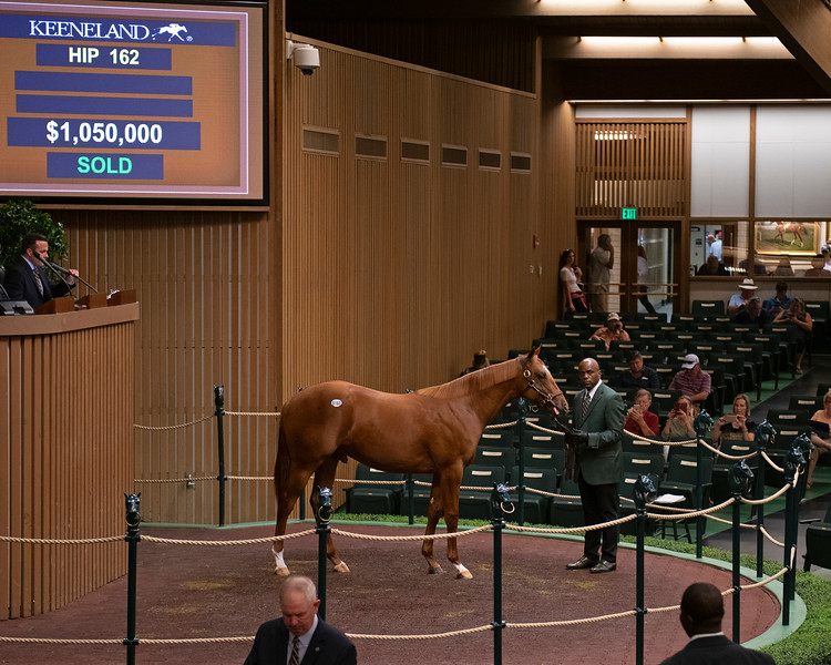 The Curlin colt consigned as Hip 162 in the ring at the Keeneland September Sale