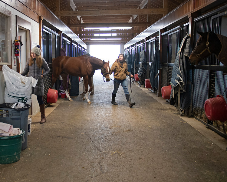 Leaving stall for aqua equine treadmill<br /> Code of Honor at Margaux Farm for some down time before returning to Shug McGaughey and his 4-year-old campaign on<br /> Jan. 23, 2020 Margaux Farm in Midway, KY.