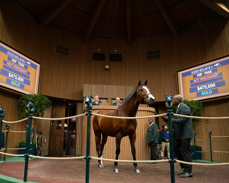 Hip 795K Pomeroys Pistol, Brookdale and Mike Ryan<br /> Keeneland January Horses of all ages sales on<br /> Jan. 14, 2020 Keeneland in Lexington, KY.