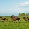 Caption: mares and foals running<br /> Mares, foals, yearlings, scenes at Ashview Farm near Versailles, Ky., on April 28, 2020 Ashview Farm in Versailles, KY.