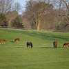 Caption: mares and foals in field<br /> Mill Ridge Farm scenes, near Lexington, Ky.,  on April 16, 2020 Mill Ridge in Lexington, KY.