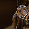Close up during auction at Keeneland<br /> Keeneland January Horses of all ages sales on<br /> Jan. 15, 2020 Keeneland in Lexington, KY.