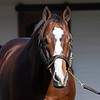 Into Mischief at<br /> Spendthrift<br /> on  Nov. 8, 2019 Spendthrift in Lexington, KY.