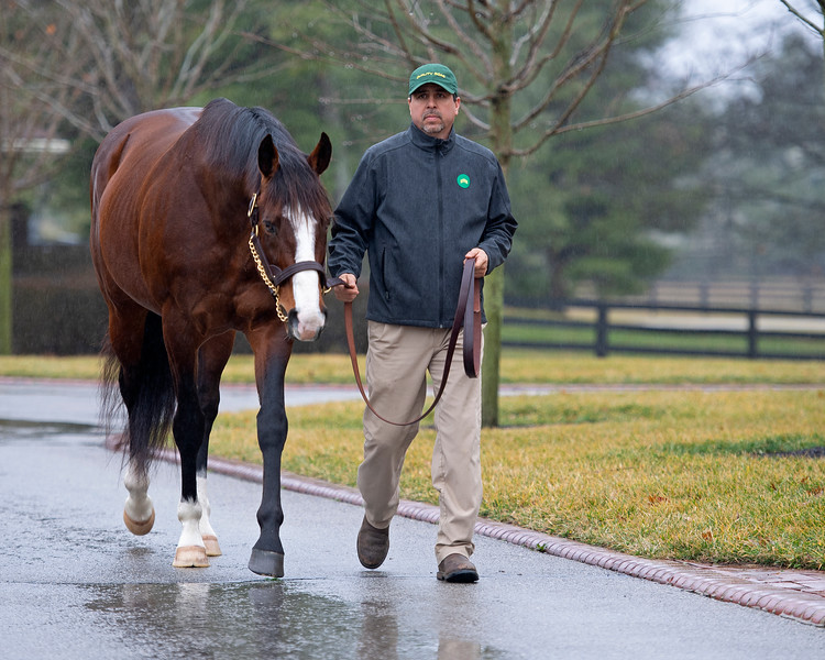 Union Rags at Lane's End Farm Press Pass 2020 on<br /> Feb. 4, 2020 Lane's End Farm in Versailles, KY.